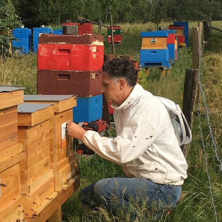 Fuhrmann-Bienen